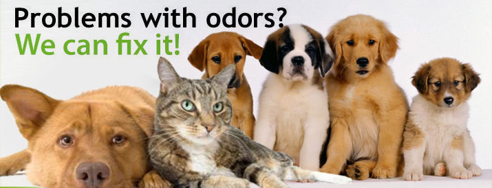 pet odor removal temecula
