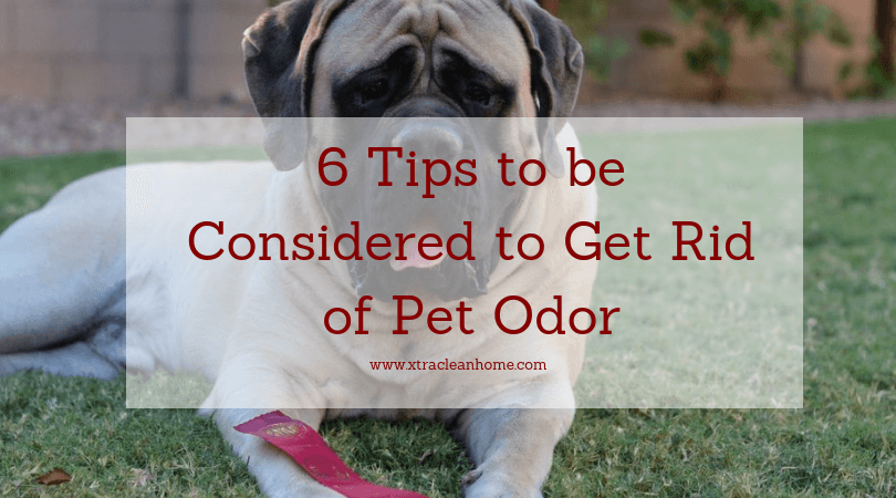 6 Tips to be Considered to Get Rid of Pet Odor