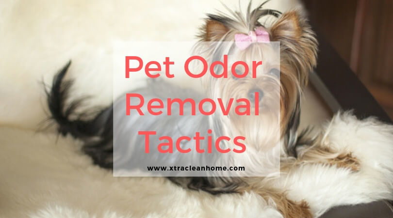 Pet Odor Removal Tactics