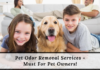 Pet Odor Removal Services - Must For Pet Owners!