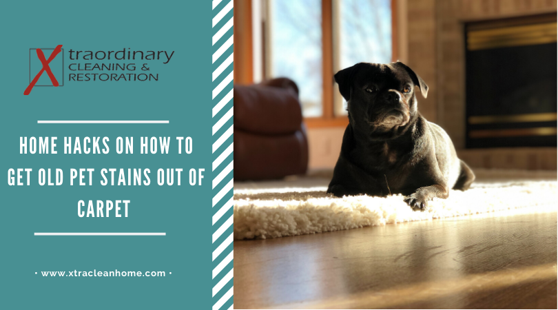 Tips to Remove Pet stains on carpet